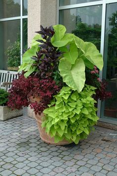 Bold foliage plants in a large pot.