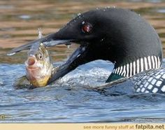 fish for a loonie