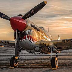 Beautiful P-40.