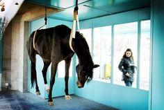 Chloë Opsomer, geen naam, Maya Bösch en Régis Golay. Mensen zijn altijd al gevoelig geweest wanneer er dode dieren als kunst worden gebruikt. Opgezette dieren worden niet altijd geapprecieerd. Vaak door dierenliefhebbers, vegetariërs,... Men houdt er niet van dat dieren worden mishandeld dus dat is ook de norm.