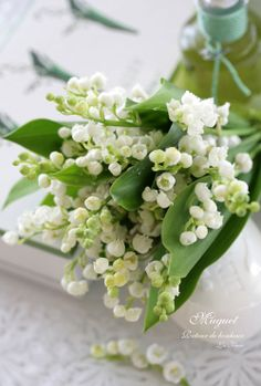 lily of the valley - I'm looking forward to these blooming out in the garden!