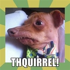I love the dog named Tuna!