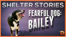 Fearful Dog - Shelter Stories: Bailey Puppy Training Tips, Dog Training Videos, Shelter Dogs, Dandy, Case Study, Dogs And Puppies, Doodle, Pets, Scribble