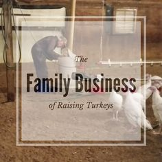 The family business of raising turkeys ... meet Erica, a newlywed going back to work full-time on her 6th generation turkey farm. #turkeyeveryday #MNAg