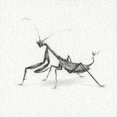 Preying Mantis ~ Courtney Brims
