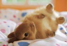 awww... baby bunny with four paws up. Caramel. yummy bunny.