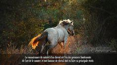 La connaissance du naturel d'un cheval est l'un des premiers fondements de l'art de le monter, et tout homme de cheval doit en faire sa principale étude.