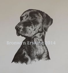 'Woody' by Bronwyn Erskine illustration