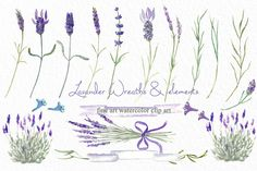 Lavender wreaths watercolor clipart by LABFcreations on @creativemarket