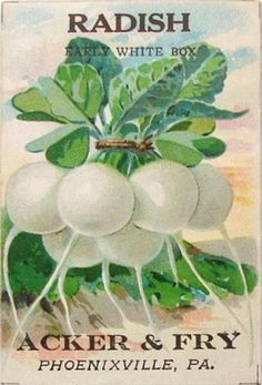 Acker & Fry's Early White Box radishes seed packet