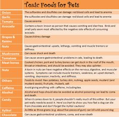 Toxic Foods for Pets - be careful out there this Halloween!