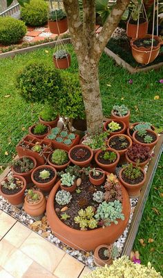 What a great way to create a succulent garden!  These pots can easily be moved indoors when the weather gets cold.