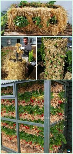 DIY Straw Bale Strawberry Garden Instruction-Gardening Tips to Grow Vertical Strawberries Gardens