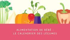 Après le calendrier des fruits, voici le calendrier des légumes pour bébé ! Ce repère vous permet de savoir quand bébé peut manger tel légume, frais.