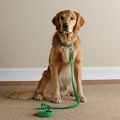 A leash your dog will love too! Our Kiss My Mutt braided dog leash puts a stylish spin on your daily doggy walks.