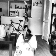PHOTO BOMBING HUSKY!  nice handstand, but the dog makes it