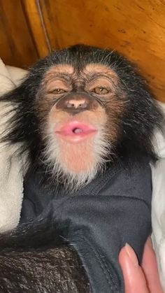 my favorite animal Baby Animals Pictures, Funny Animal Pictures, Animals And Pets, Pictures Of Monkeys, Funny Monkey Pics, Monkey Memes, Ugly Animals, Cute Baby Monkey, Pet Monkey