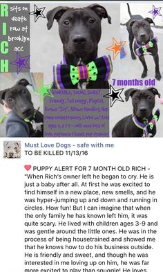 SAFE❤️❤️ 11/13/16 BY POSH PETS RESCUE❤️ THANK YOU SO MUCH❤️ Brooklyn Center My name is RICH. My Animal ID # is A1094782. I am a neutered male black and white am pit bull ter mix. The shelter thinks I am about 7 MONTHS old. I came in the shelter as a OWNER SUR on 10/26/2016 from NY 11221, owner surrender reason stated was LLORDPRIVA. http://nycdogs.urgentpodr.org/rich-a1094782/