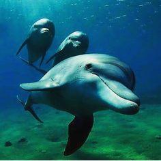 Photo by @alessandro.gabrielli -- tag your photos #bg_underwater #uw #uwlife #uwpics #underwater #uwphotography #underwaterlife #underwaterpics #underwaterphoto #underwaterphotography #underwaterphotographer #ocean #padi #photo #paditv #photooftheday #powershot #protectthemarinelife #reefs #sea #scuba #scubadive #scubadiving #dive #diving #cmas #coralreefs #marinelife by bg_underwater