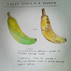 About Bananas #getwise2013