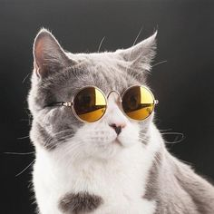 316dbe66984b Silly pets wear sunglasses look fantastic! Features  Frame with8.3cm(3.26in