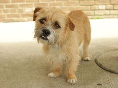Sparky - Jack Russell Terrier mix