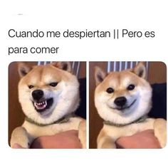 Image when they wake me up but it is to eat in album funny memes, Funny Memes Images, Funny Spanish Memes, Funny Posts, Funny Pictures, Image Memes, New Memes, Dankest Memes, Album, Funny Animals