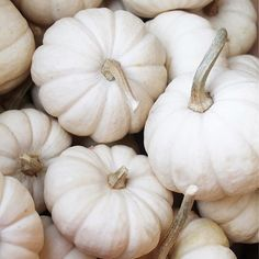 Oh my gourd. Are these not the prettiest pumpkins ever? : @centralsquareflorist . . . . . #fall #fallleaves #pumpkins #octoberismyfavoritecolor #loveyourhabitat #sloaneranger #sloanestyle #fashion #instaprep #preppy #preppystyle #instastyle #modernprepgazette #preppythings #modernprep #fallfashion #fallstyle #gourds #pumpkins                                                                                                                                                                                                                                                                                                                                                                                                                                                                                                                                                             Instagram