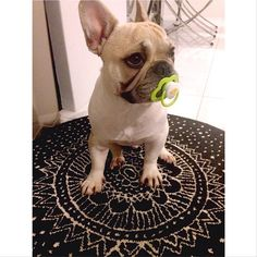 Pacifier pacified!
