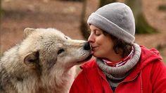 El lobo bueno que tu perro lleva dentro