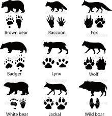 Kuvahaun tulos haulle lynx lynx footprint