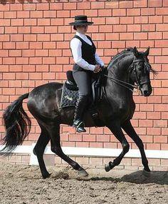 Show Horse Gallery - Lusitanohengste Lorde und Xeque do Nilo