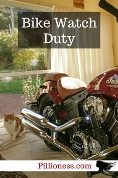 This is one motorcycle cat who takes bike security seriously! Cat Love, Biker, Motorcycles, Cats, Funny, Girls, Gatos, Little Girls, Kitty Cats