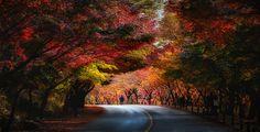 Autumn Road by Jaewoon U