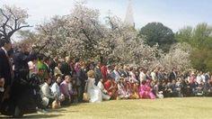 Afficher l'image d'origine   桜を見る会 2015