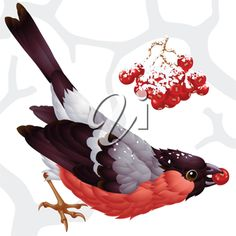 iCLIPART - Clip Art Illustration of a Bullfinch and Berries in Winter #clipart #illustration #winter