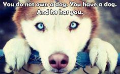 dog #motivational #quote
