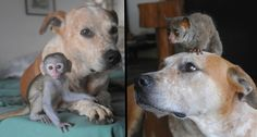 'Unadoptable' Dog Now Rescues Orphaned Wildlife