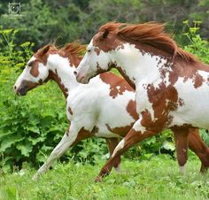How Long Do Horses Live & Everything about Horse Age #horselove