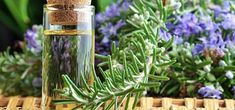 As people are starting to realize the health benefits of rosemary herb (and its oil), more and more are are starting to use it. Rosemary Herb, Garden Plants, Mother Nature, Aloe, Health Benefits, Natural Remedies, Herbalism, Glass Vase, Hair Beauty