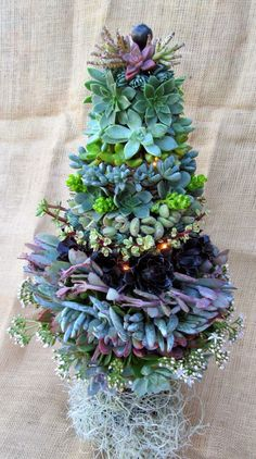 ABC of Succulents: Different Christmas trees ღ✿´¯`*•.¸¸✿ღღ✿´¯`*•.¸¸✿ღღ✿