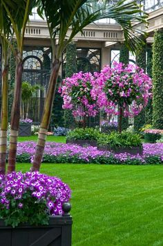 Gorgeous purple flowers at Longwood Gardens, near Philadelphia, in Kennett Square, PA,