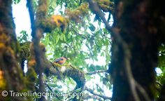 A Memorable Family trip to Binsar Wildlife Sanctuary and Jageshwar || Uttrakhand Diaries