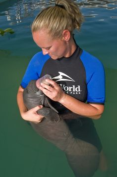 AWWW.....I want the baby Manatee so bad! ;D