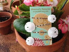 Sand Dollar Bobby Pin Pack - made in Hawaii! These are adorable
