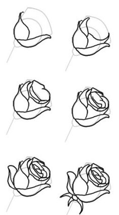 Rose steps