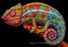 incredibly detailed pencil crayon drawings of iguana and chameleon by tim jeffs…