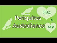 ♡ Periquitos Australianos Tomando Banho no Bebedouro ♡