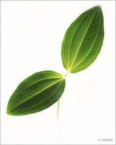 Botanicals by Kiyoshi TOGASHI, via Behance