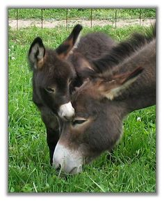 Donkeys are my second favorite animals They are so cute